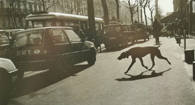 The Dog in France by Koji Onaka